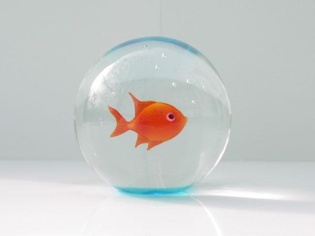 Il pesce rosso for Pesce rosso costo